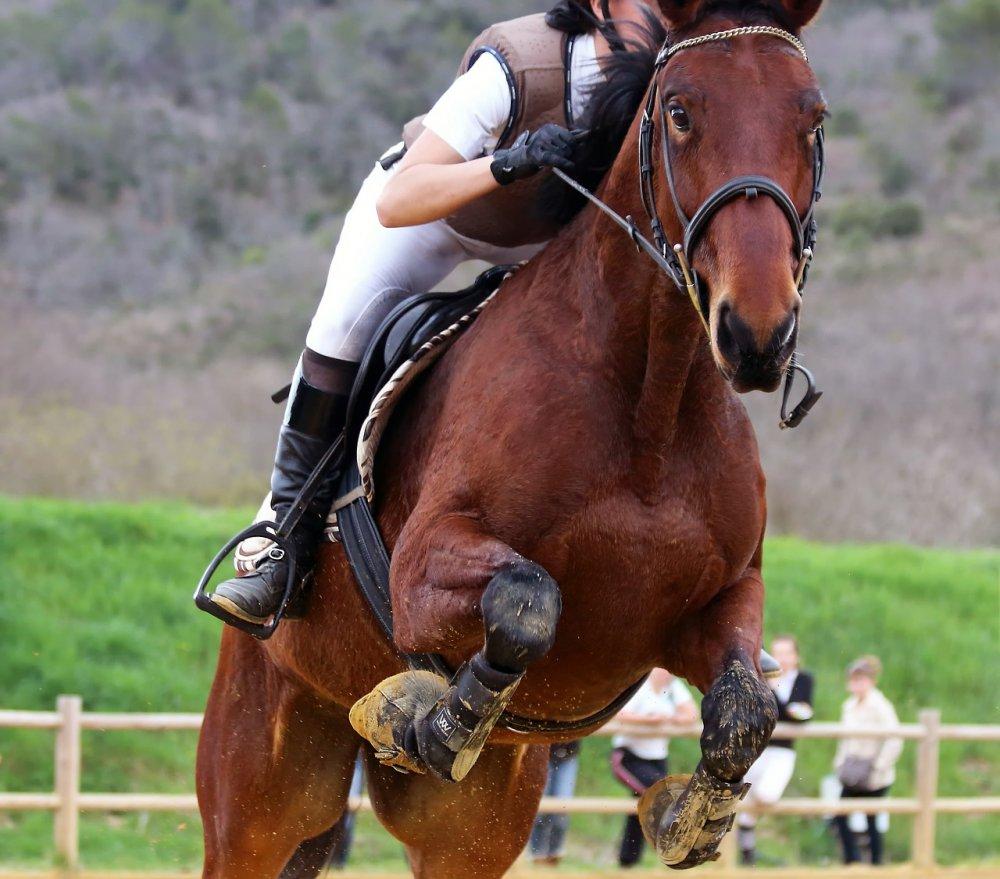 Lär tillsammans med hästen på ridlektioner i Stockholm